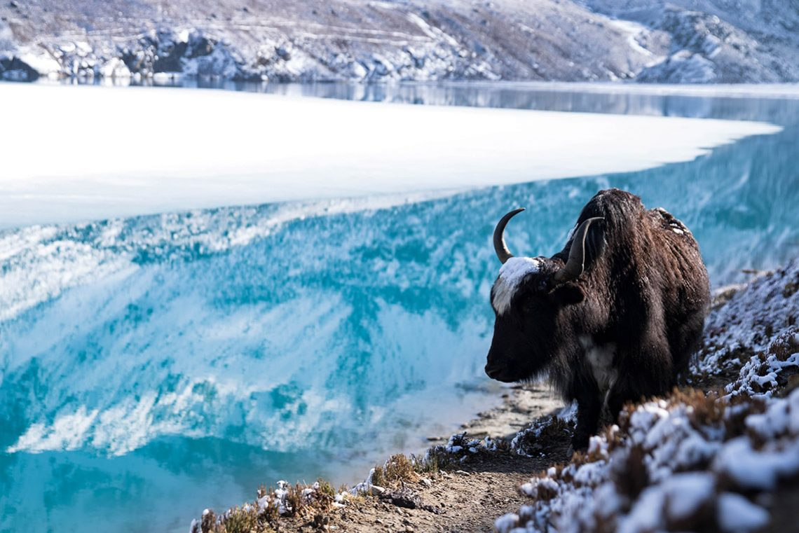Hiking the Himalayas: Gokyo Lakes Trek