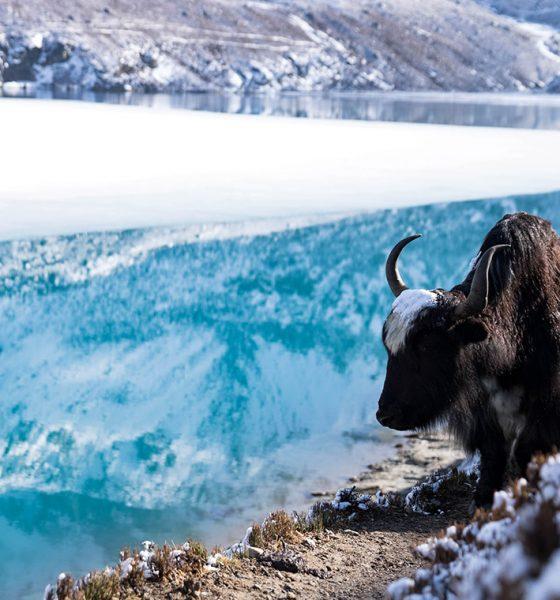 Treking v Himalájach: Gokyo Lakes trek
